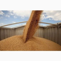 Перевозка зерновых грузов. Транспорт для перевозки зерна
