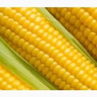Закупаем кукурузу, ячмень, пшеницу, овес, рожь, просо, горох, сою по Луг.области