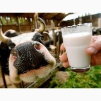 Заменитель цельного молока для телят поросят козлят