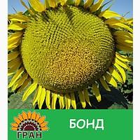 Соняшник Бонд, стійкий до до гранстару 25г/га