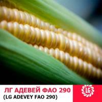 Семена кукурузы Адевей Лимагрейн ФАО 290 цена за мешок