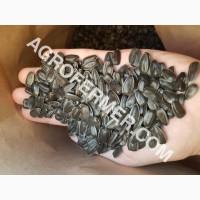 Семена подсолнечника VIKING F 696 канадский трансгенный гибрид