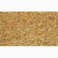 Закупаем отход пшеницы урожай 2019
