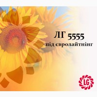 Пропонуємо насіння соняшника ЛГ 5555