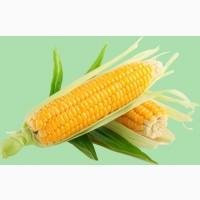 Кукуруза продать. Кукуруза куплю