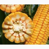 Семена кукуpузы ЛГ 30352 ФАО 340 (Lg 30352) цена за мешок