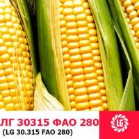 Семена кукурузы ЛГ 30315 ФАО 280 ( LG 30315) цена за мешок