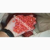 Семена кукурузы CORBIN FS - 899 ФАО 260 Канадский трансгенный гибрид