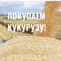 Покупаем кукурузу по конкурентной цене