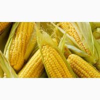 Купуємо кукурудзу
