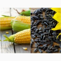 Продаются семена кукурузы и подсолнечника по низким ценам