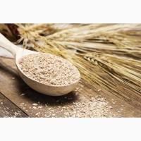 Куплю отруби пшеничные / Куплю висівки пшеничні