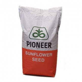 Подсолнечник: Pioneer (P64LE99), Пионер (П64ЛЕ99)