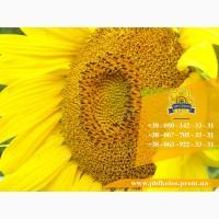 Семена подсолнечника / Рекольд - насіння соняшника (під Гранстар)