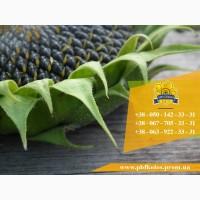 Семена подсолнечника Солтан / Насіння соняшника