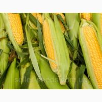 Семена кукурузы Новый ФАО 330 цена за посевную 2018 год