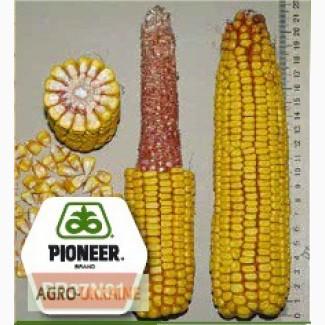 Кукуруза Пионер ПР37Н01