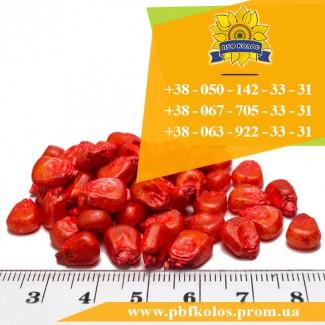 Семена кукурузы / Насіння кукурудзи Оржиця 237 МВ від ПБФ «Колос»