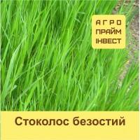 Насіння трави Стоколос безостий