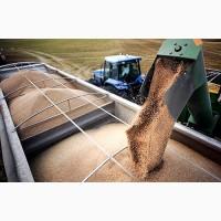 Грузоперевозки зерновозами с/х грузов по Украине