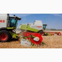 Предоставляем услуги по уборке зерновых и масличных культур