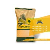 Якісне насіння соняшника Златсон від виробника
