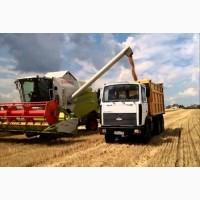 Перевозка зерна по Украине. Услуги зерновозов