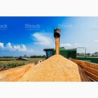 Купим дорого зерновые