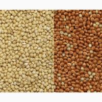 Продам семена белое, желтое, красное и черное просо. Самовывоз и доставка