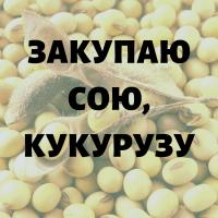 Закупаю сою, кукурузу по хорошей цене. Черниговская обл