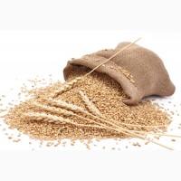 Куплю пшеницу ІІ класса