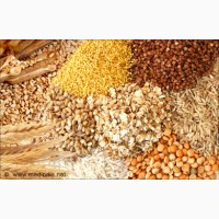 ОПТ ЗАКУПКА. Пшеница, кукуруза, ячмень, соя и др