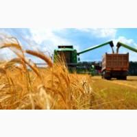 Перевозка зерна. Услуги зерновозов