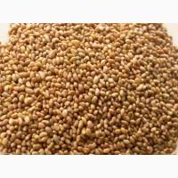 Продам семена ЛЮЦЕРНЫ большим и малым объемом, цена договорная