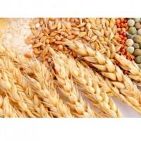 Ячмень, пшеница, горох, рапс дорого