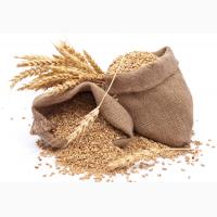 Предприятие ЗАКУПАЕТ зерновые, масличные и зернобобовые культуры