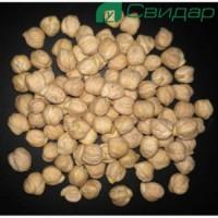 Семена нута БАР-элита (импорт)