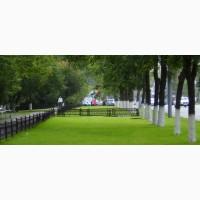 Травосмесь для озеленения парков и городских территорий