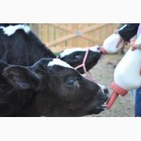 ЗЦМ сухое молоко для телят поросят козлят