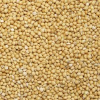Купуємо зерно гречки, вівса, проса, ячменю, пшениця фуражна, кукурудза
