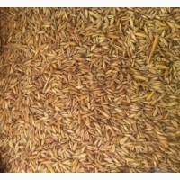 Куплю зерноотходы, пшеницы, кукурузы (1-2 категории)