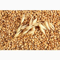 Куплю зернові, бобові, некондицію, зерновідходи