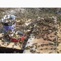 Соевая мука применяется как протеиновая подкормка для пчел
