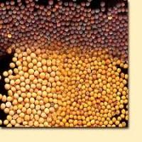 КУПЛЮ насіння гірчиці