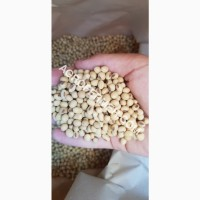 Семена сои COLBY Канадский трансгенный сорт. (усточива к глифосату)