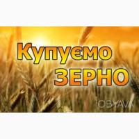 Купляєм Пшеницю, Кукурудзу, Сою, Жито, Висівки пшеничні по хороших цінах