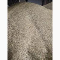 Зерно ячменю без хімії