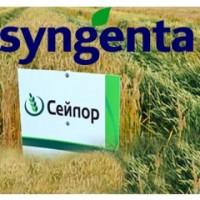 Пропоную високоякісний посівний матеріал пшениці