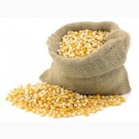 Предприятие закупает кукурузу и др. с.х. культуры