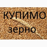 Компанія на постійній основі закуповує пшеницю фуражну